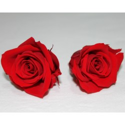 Red Preserved Mini Roses - Pack of 12