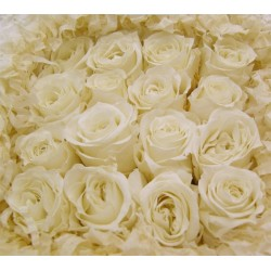 White Preserved Micro Roses - Pack of 16
