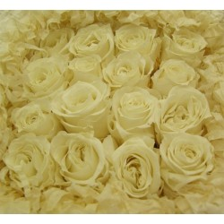 Ivory Preserved Micro Roses - Pack of 16