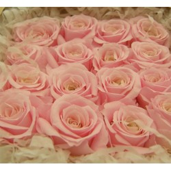 Pink Preserved Micro Roses - Pack of 16
