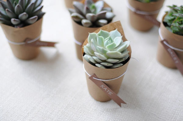 5386905Succulent_Wedding_Favors